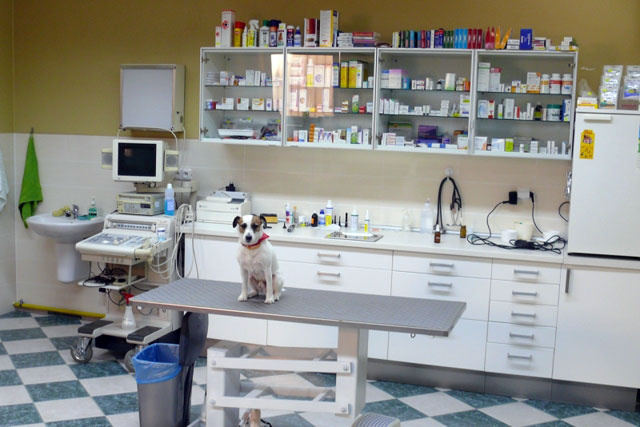 Digital signage for veterinary clinics